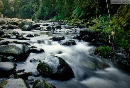 Allyn River, Barrington Tops National Park, NSW