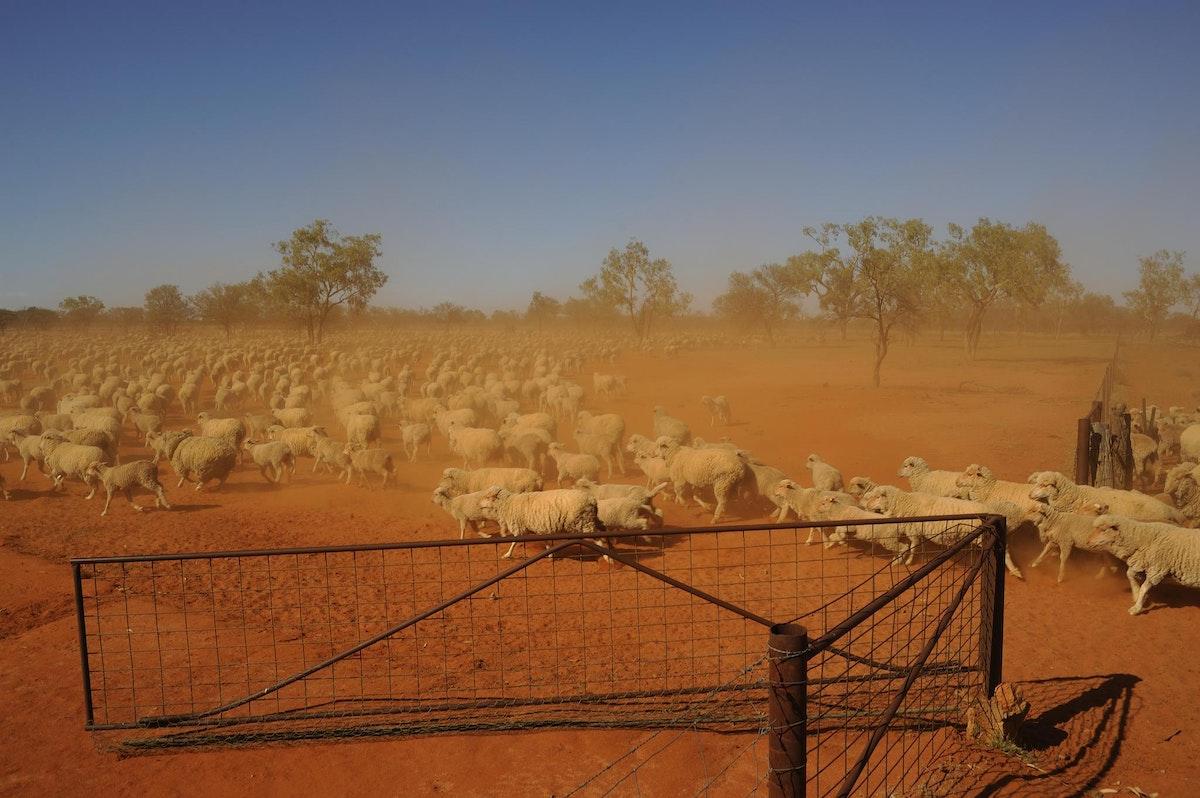 Picarilli Station_728560 - Outback QLD, Australia Documentary © Steve Marshall