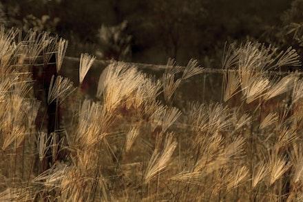 GRASS_0065