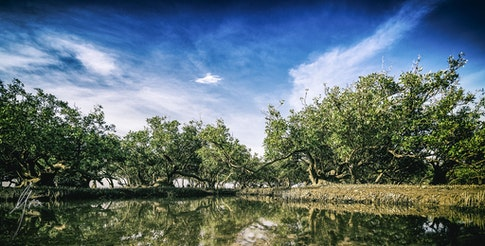 Trees Karratha 2