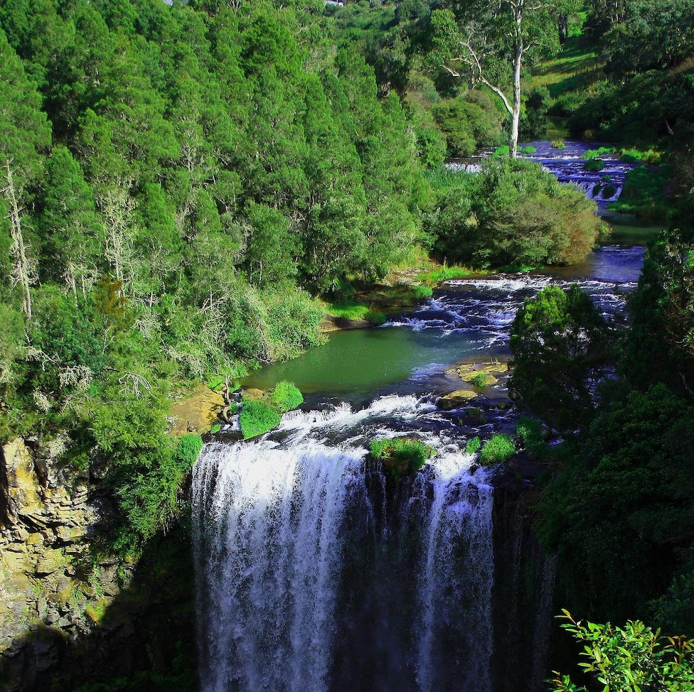 The Dangar Falls - Dangar Falls are located about 1.2 km north of Dorrigo, on the Bielsdown River. The falls are small but picturesque, and are a popular...