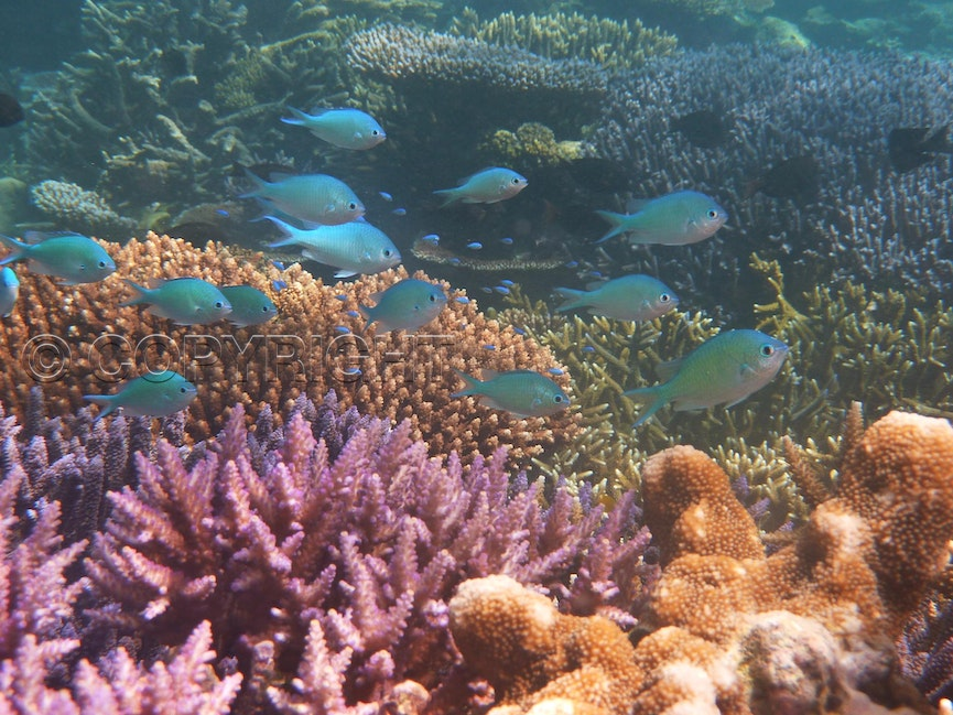 Coral garden and fish