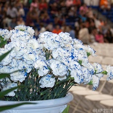 2016 ZHS Graduation Ceremony - Images taken by Leonard Hill and Staff at the 2016 Zanesville High School Graduation Ceremony on 06-04-2016.