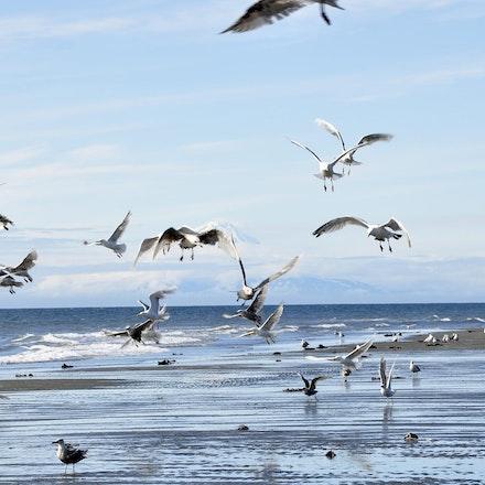 Seagulls Flock the Beach