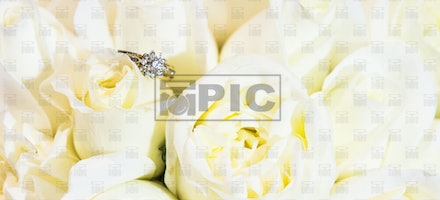 TMPIC_Wedding_Nour_Jeff_016