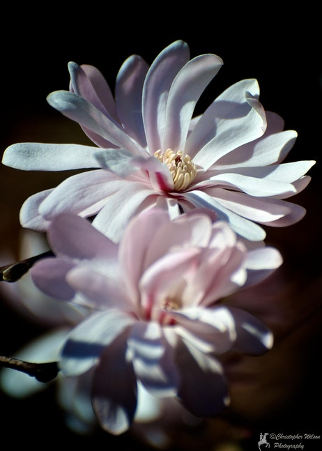Spring Flower 008