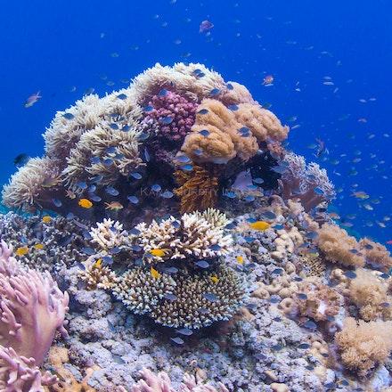 Pulau Satonda coral 2 - Colourful coral, Pulau Satonda, Indonesia