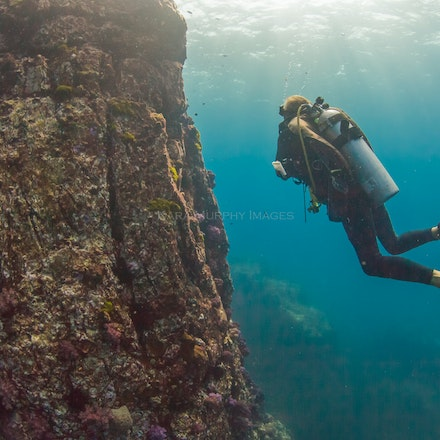 Diver, Western Rocky 3 - A diver explores the Western Rocky dive site.
