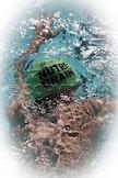 mScott n Alison Swim 19-4-2011 1