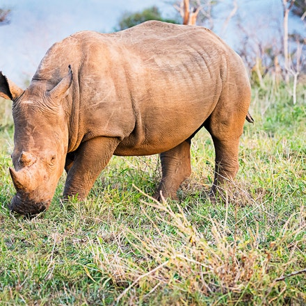 021 Thanda Safari Lodge 030515-8400-Edit