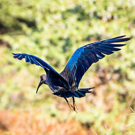 021 Thanda Safari Lodge 030515-8491-Edit