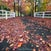 Oak Road Autumn 12 May 2014 IMG_1597 1050