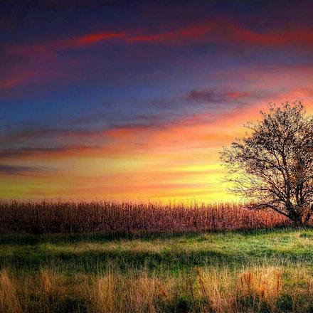 Solitude 10.23.2014.1 - Solitude. A fall sunset frames a solitary tree on the edge of a Lancaster County, Nebraska cornfield. #nebraska #farm #rural #cornfield...