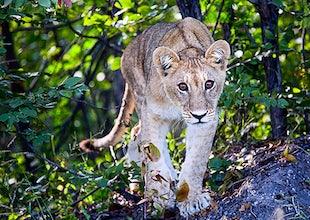 Wildlife/Africa