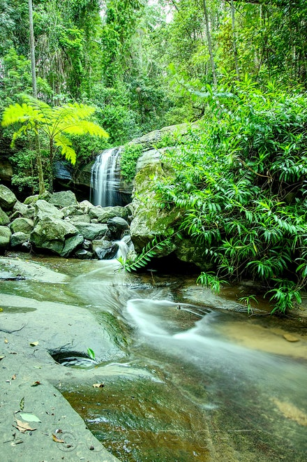 serenity fall - Serenity Fall also known as Buderim waterfall in Queensland Australia.