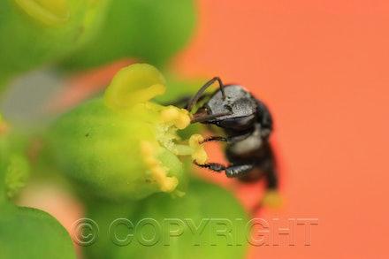 native bee 2 high